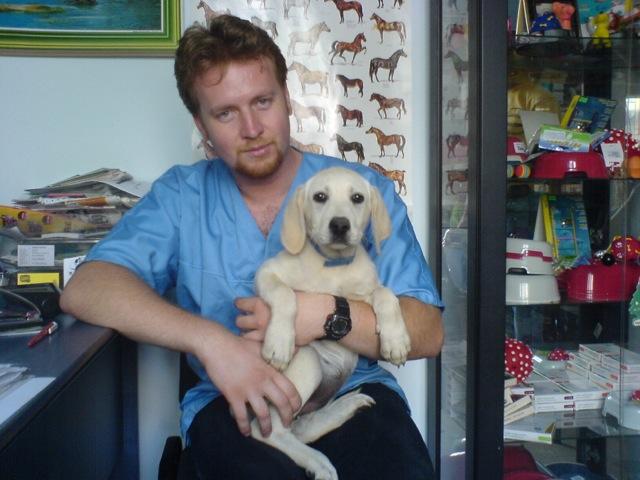 Labrador pui 3 luni