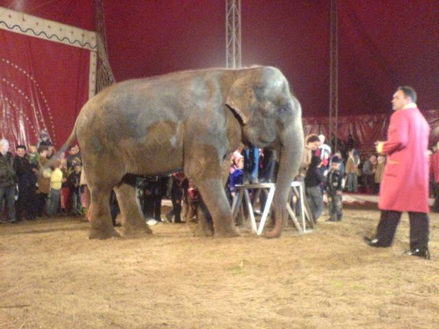 Elefant Indian