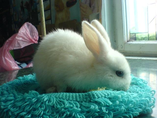 Ierpuras alb 2 luni