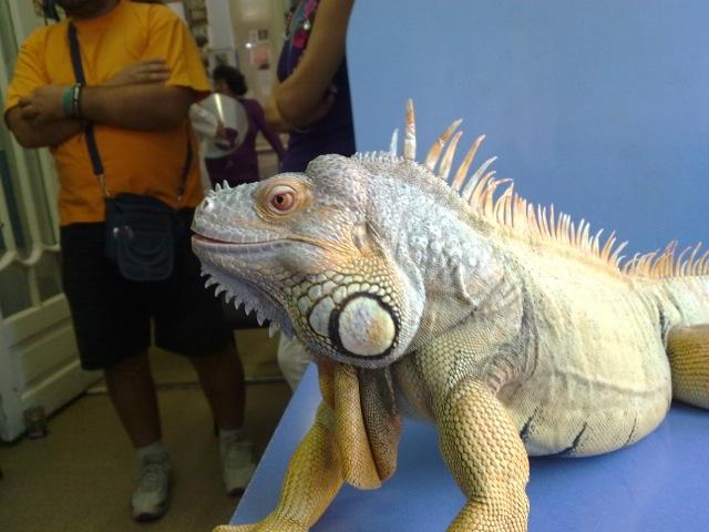 Iguana uriasa